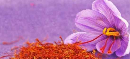 藏红花多少钱1斤 藏红花报价、藏红花的价格多少一斤、藏红花的好处有哪些